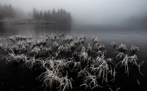 Picture nature, fog, lake