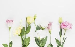 Picture flowers, background, bouquet, decor, eustoma