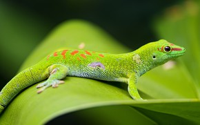 Picture green, reptile, scales