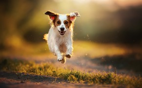 Picture nature, each, dog, running
