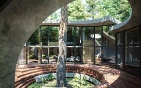 Picture tree, stage, architecture, structure, corner