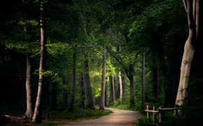 Picture road, summer, Park