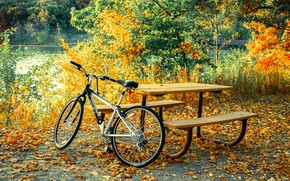 Picture autumn, leaves, branches, nature, bike, great, comfort, pond, Park, table, mood, stay, shore, yellow, falling …