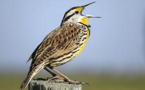 Picture bird, beak, column