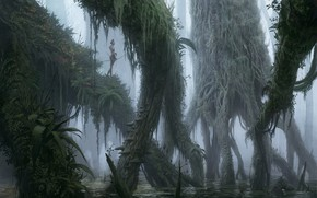 Picture forest, trees, fog, hunter, Swamp