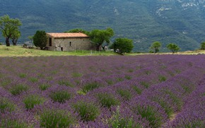 Picture France, Nature, Mountains, Trees, House, House, Nature, France, Mountains, Trees, Лавандовые Поля, Lavender Fields