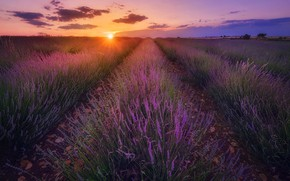 Picture field, landscape, sunset, nature, lavender