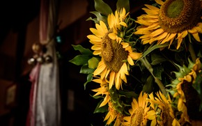 Picture sunflowers, flowers, the dark background, room, bouquet, yellow, sunflower