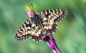 Picture flower, macro, pattern, butterfly, wings, stem, insect, green background, bokeh