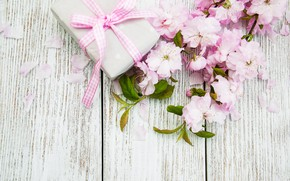 Picture gift, branch, Sakura, Olena Rudo