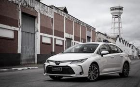 Picture photo, Toyota, Car, Hybrid, Sedan, Corolla, Latam, Altis, 2019