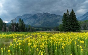 Picture field, forest, summer, clouds, flowers, mountains, clouds, glade, tops, yellow, meadow, haze, snapdragons, gillyflower
