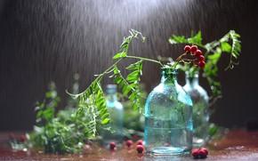 Picture greens, leaves, water, drops, berries, rain, bottle, still life, Rowan, a bunch, bokeh, bottle