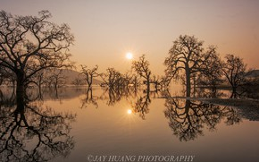 Picture the sun, trees, fog, lake, reflection, dawn