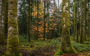Picture autumn, forest, trees, moss