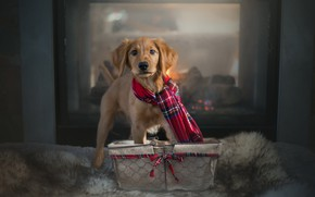 Picture house, dog, scarf