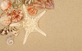 Picture sand, beach, summer, shell, summer, beach, sea, sand, starfish, seashells
