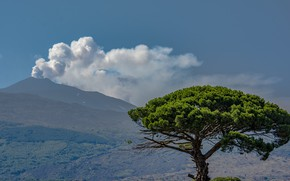 Picture tree, the volcano, Italy, Etna, Sicily