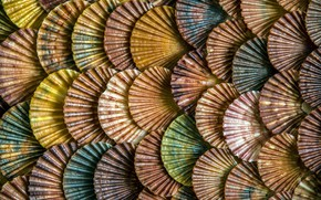Picture texture, scales, shell