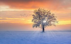 Picture winter, rays, snow, sunset, birds, tree
