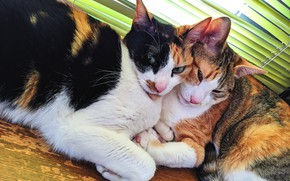 Picture look, cats, cats, two, pair, a couple, Duo, friends, two, lie, girlfriend