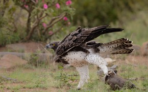 Picture flowers, nature, pose, bird, eagle, claws, mining