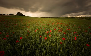 Picture field, the sky, clouds, trees, flowers, clouds, hills, Maki, space, red, green, cereals, poppy field, …