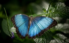Picture leaves, macro, butterfly, blue