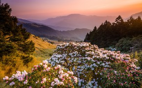 Picture forest, flowers, mountains, nature, fog, dawn, hills, beauty, spring, morning, ate, Asia, haze, white, flowering, …