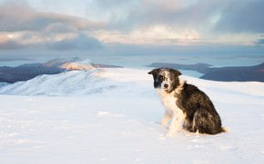 Picture dog, look, snow, mountains, winter, frost, tops, the border collie