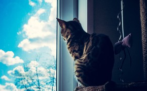 Picture cat, cat, look, glass, face, clouds, pose, grey, room, toy, back, window, sitting, striped, bow, …