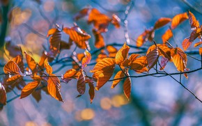 Picture autumn, light, branches, yellow, orange, blue background, bokeh, autumn leaves