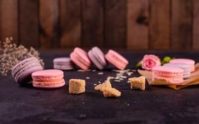 Picture rose, petals, sugar, cookies, macaron