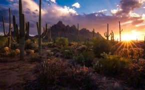 Picture the sun, rays, landscape, sunset, mountains, nature, desert, AZ, cacti, USA, National Monument, Sonora, national …