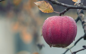 Picture Sheet, Drops, Apple, Branch