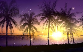 Picture water, the sun, nature, palm trees, polymasc