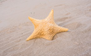 Picture marine, beach, beach, sand, sand, summer, starfish, summer, star