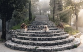 Picture rays, dog, stage, statues, dog, rays, Retriever, steps, retriever, statues, Uschi Hermann