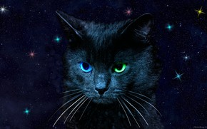 Picture cat, the sky, eyes, color, stars, different