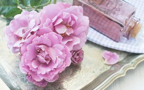 Picture flowers, background, roses, lilac roses