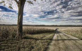 Picture Illinois, Road, Logan County