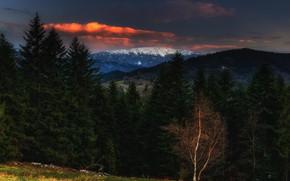 Picture forest, landscape, sunset, mountains, nature, the evening, Poland, Carpathians, Sośnicki Michael, Babia Gora