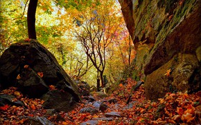 Picture Autumn, Forest, Fall, Foliage, Autumn, Forest, Leaves