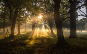 Picture The sun, Nature, Grass, Trees, Forest, Leaves, Branches, The Sun's Rays