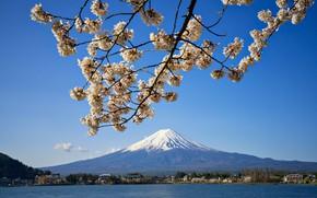 Picture spring, Japan, Sakura, mount Fuji, lake Kawaguchi