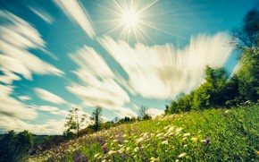 Picture flowers, slope, hill, treatment, greens, mood, meadow, blue, summer, the sky, grass, blur, photoshop, positive, …