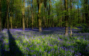 Picture greens, forest, light, trees, flowers, branches, glade, foliage, spring, shadows, lilac