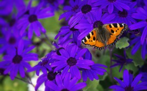 Picture summer, macro, flowers, butterfly, Bush, garden, purple, insect, lilac, urticaria