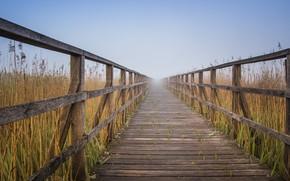 Wallpaper Nature, Road, Fog, Board, Landscape, Railings, The reeds, Flooring