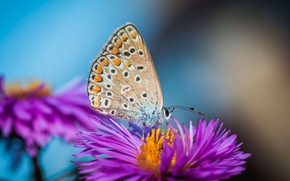 Picture macro, flowers, nature, butterfly
